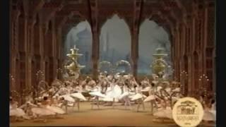 Le Corsaire - Le Jardin Animé